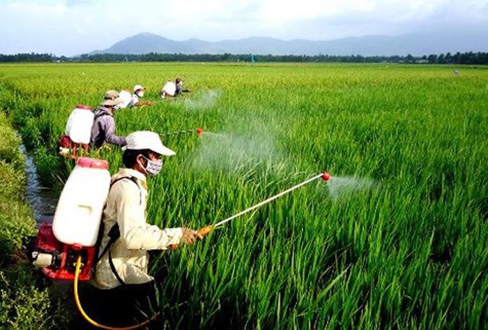 Tem chống hàng giả thuốc bảo vệ thực vật: Cứu cánh cho người dân